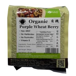 Organic Purple Wheat Berry